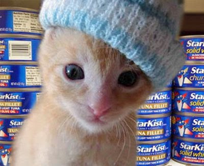 Tiny ginger kitten with knit cap on head in front of tuna cans.