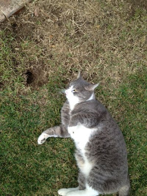 Cat rolling near Gopher hole