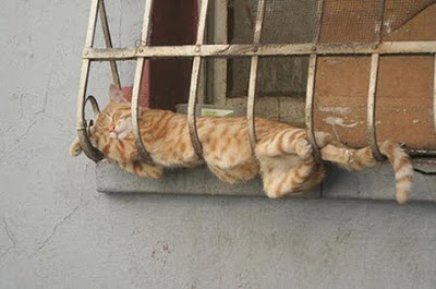 Tiger Kitty sleeping in a window box.