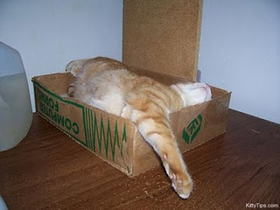 Orange Kitty sleeping in a small box with part of his body hanging out of the box.
