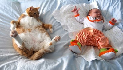 Super fat orange kitty with white bely on back and litlte baby in orange outfit laying on back.