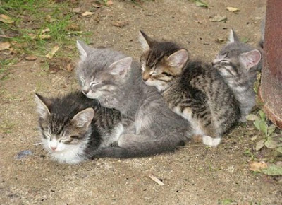 Four stripey kittens sleeping wedged against each other in a row.