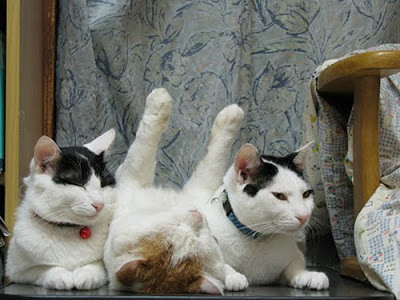 Three sleeping cats. Two are right side up and sandwich one cat upside down.