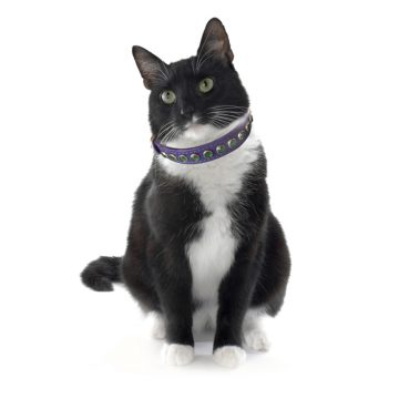 KItty Planet Metro Rhinestone Leather Safety Cat Collar in Pina Colada (purple)