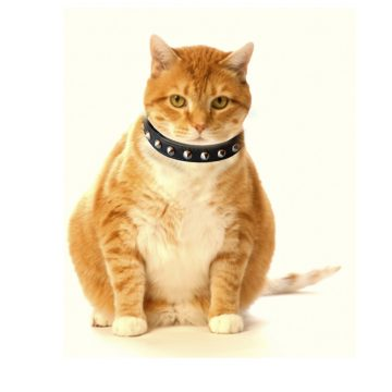 KItty Planet Studded Spiked Leather Safety Cat Collar in Dangerous (black)