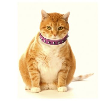 KItty Planet Studded Spiked Leather Safety Cat Collar in Notorious (pink)