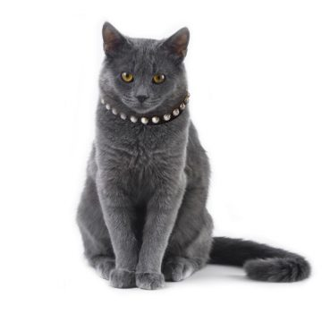 KItty Planet South Sea Pearl Leather Safety Cat Collar in Midnight (black)