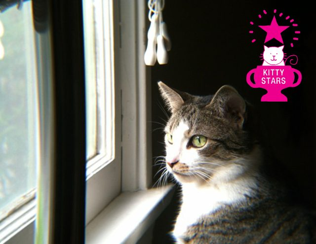 Kitty Internet Star - Chloe the Cat