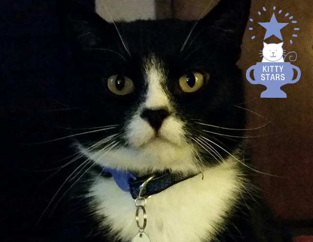 Gilley the Cat, Kitty Internet Star